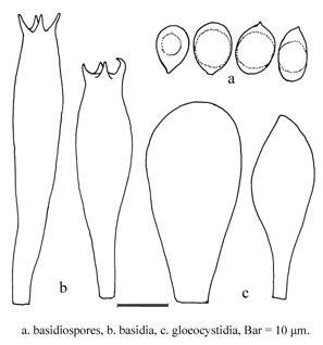 Basidiomycota >> Basidiomycetes >> Agaricales >> Amanita